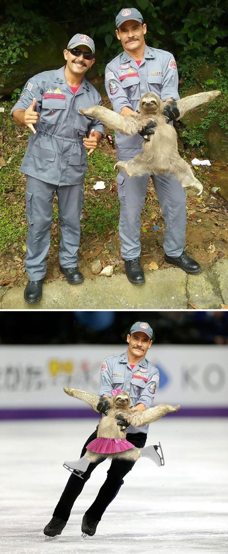 Foto penyelamatan hewan kukang, berubah jadi tarian balerina. Foto: istimewa