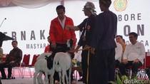 Cerita Peternak Kambing ke Jokowi soal Uang Bensin