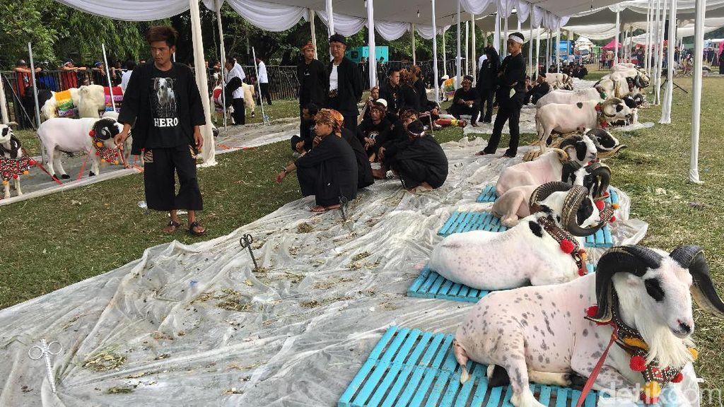 Minggu Pagi, Jokowi Hadiri Jambore Peternak Kambing di Cibubur