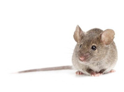 Traveler Hilang Tas di Pesawat, Balik-balik Ada Bangkai Tikusnya