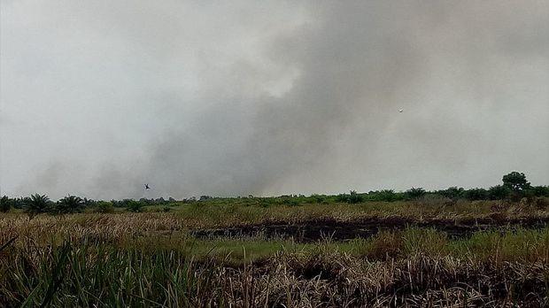 Polisi Tangkap Satu Terduga Pelaku Pembakaran Hutan di Ogan Ilir