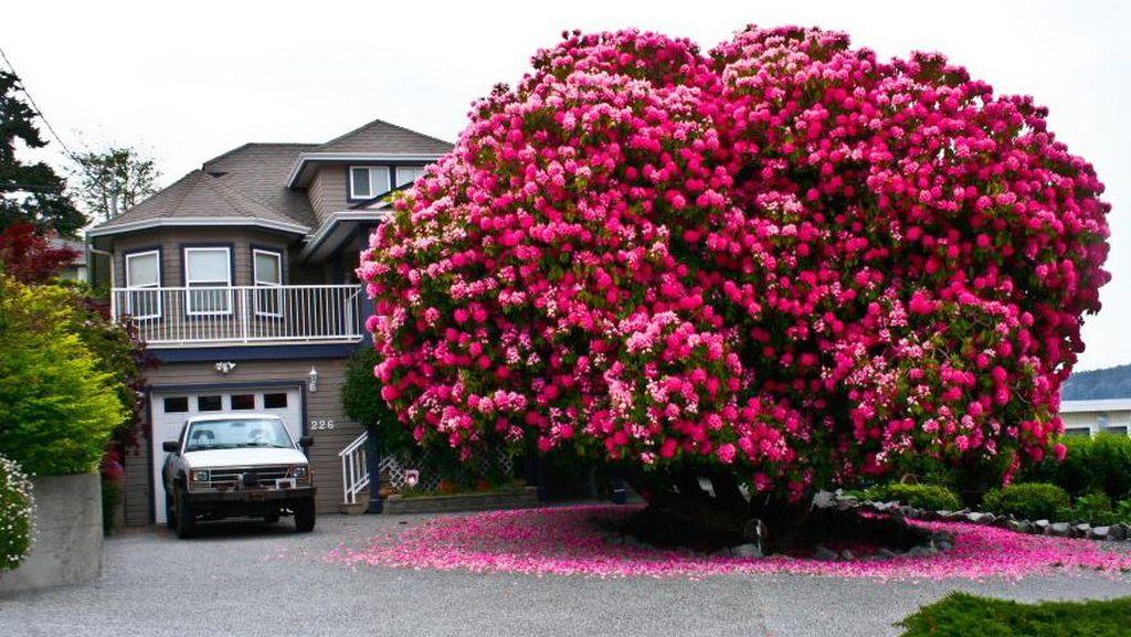 Bunga Ini Hidupkan Lagi Kota Kecil di Kanada