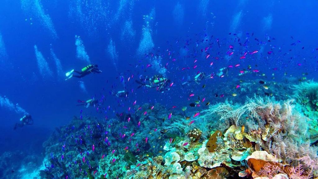 Gorontalo: Destinasi Libur Akhir Tahun Buat Pecinta Laut