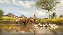Merasakan Kehidupan Pedesaan Ubud