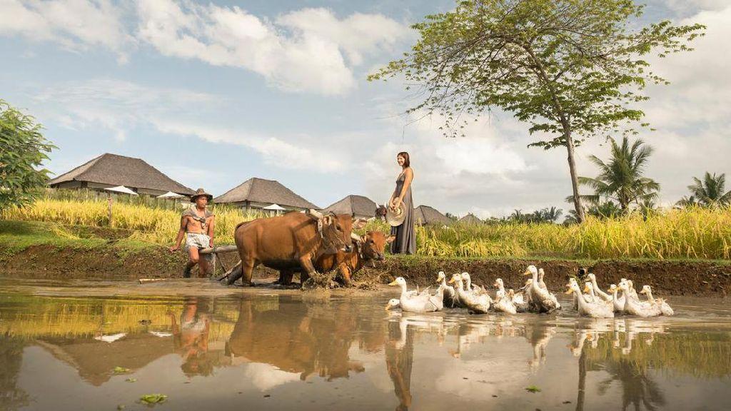 Kota-kota Paling Ramah di Dunia, Salah Satunya dari Indonesia!