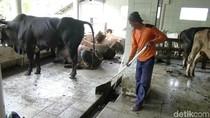 Biogas dari Kotoran Sapi, Solusi Kelangkaan Gas Elpiji di Purworejo