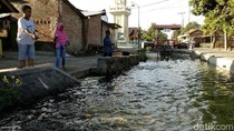 Sungai Kotor di Mojokerto ini Sekarang Menghasilkan Uang Puluhan Juta