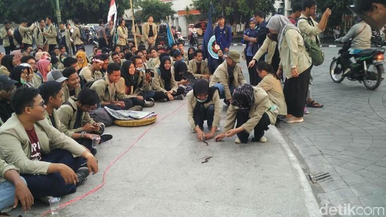 Ada Lomba Tangkap Belut dalam - Yogyakarta Ratusan mahasiswa menggelar aksi demo menuntut Setya Novanto mundur dari jabatan Ketua DPR Dalam aksi itu mahasiswa