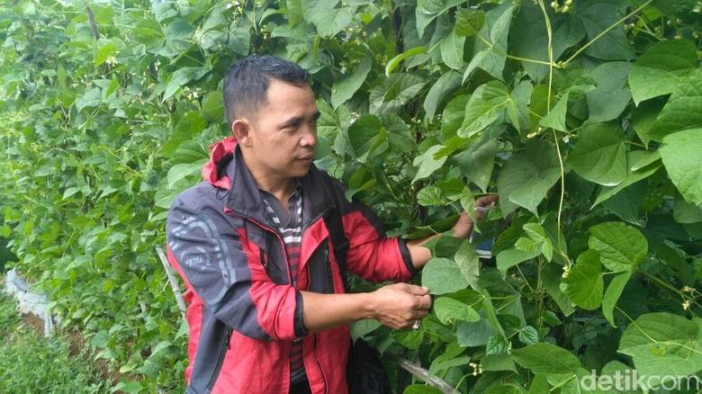 Ulus Pirmawan Raih Penghargaan Petani - Bandung Ulus Pirmawan memang sosok luar Meski hanya lulusan sekolah dasar Ulus mampu menjadi petani sukses dan mengangkat