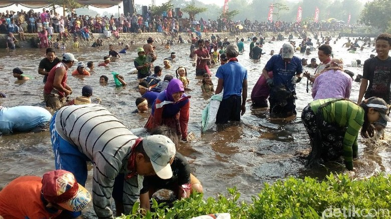 Keceriaan Tangkap Ikan Saat Panen Raya di Mojokerto