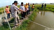 Penerapan Mina Padi di Kabupaten Kediri Berhasil