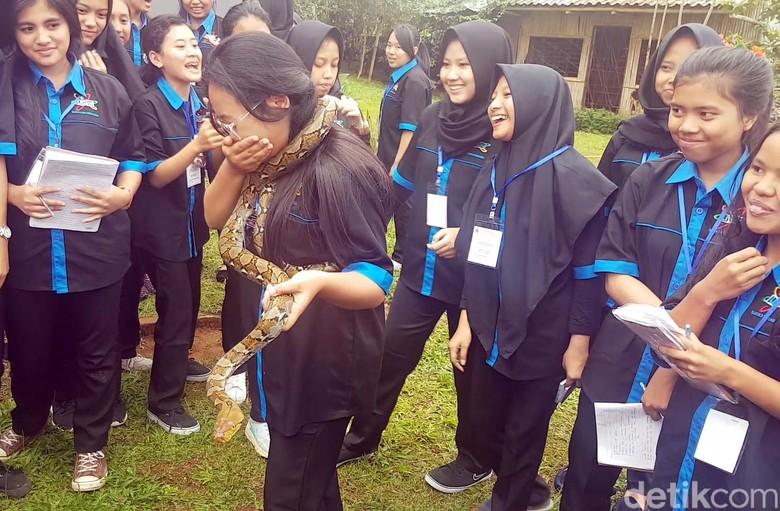 Melihat Kegelian Pelajar SMKN Sukabumi - Sukabumi Puluhan pelajar dari SMKN Kota Jawa Barat melakukan pelatihan dengan ular yang sengaja dibawa oleh komunitas Taman