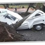 Ajaib, Sudah Tertimpa Pohon dan Ringsek, VW Kombi Masih Bisa Jalan