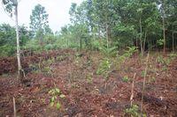 Lahan hutan yang ditanam kembali oleh relawan.