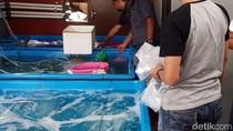 Polres Sukabumi Gerebek Gudang Penampungan Benur di Bogor