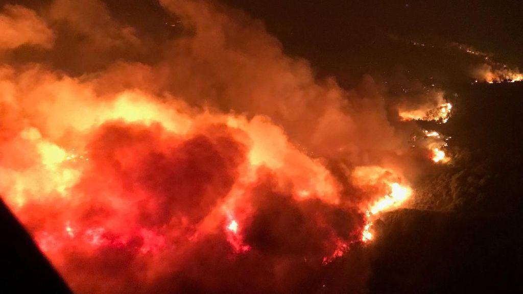 Kisah Viral Pemuda Selamatkan Kelinci Saat Kebakaran California