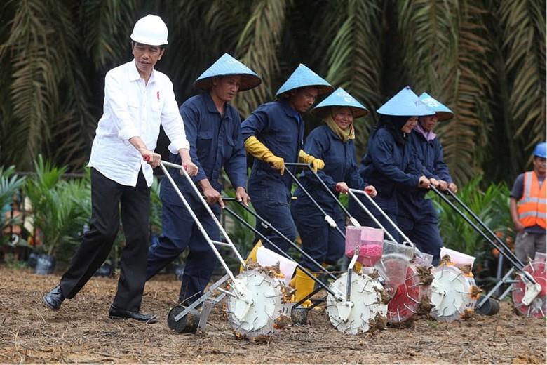 BNI Jadi Bank Pertama Biayai Peremajaan Kebun Sawit