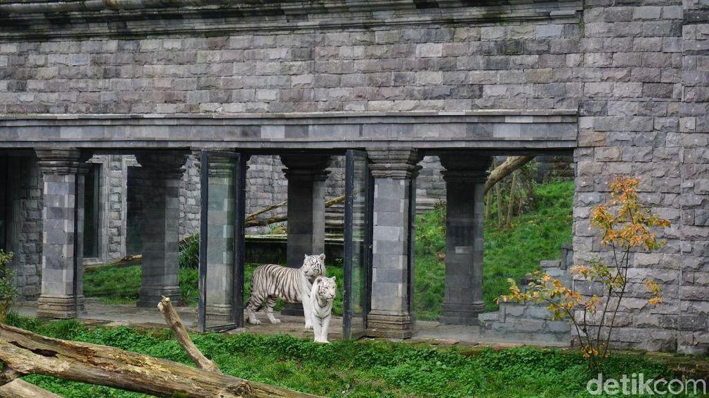 Foto: Ini Kebun Binatang Terbaik di Belgia yang Indah Tapi Tersembunyi
