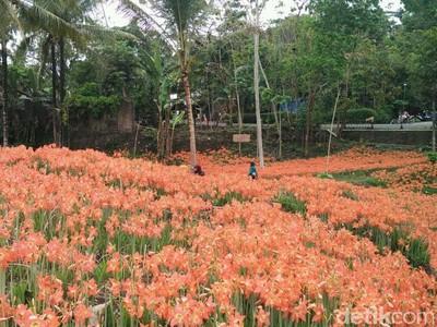 Taman Bunga Bagai di Luar Negeri, Padahal di Gunungkidul