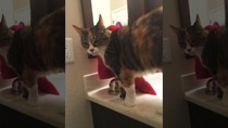 Ngeri! Kucing Dimutilasi dan Potongan Mayatnya Tersebar di California