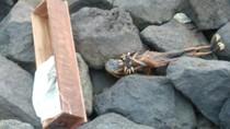 Pantai Watu-watu di Surabaya Digegerkan Penemuan Jenglot