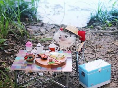 Foto: Azuki, Landak yang Suka Berpetualang