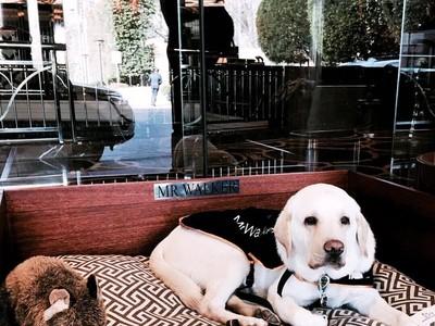 Cute! Masuk ke Hotel Ini, Penyambut Tamunya Anjing Lucu