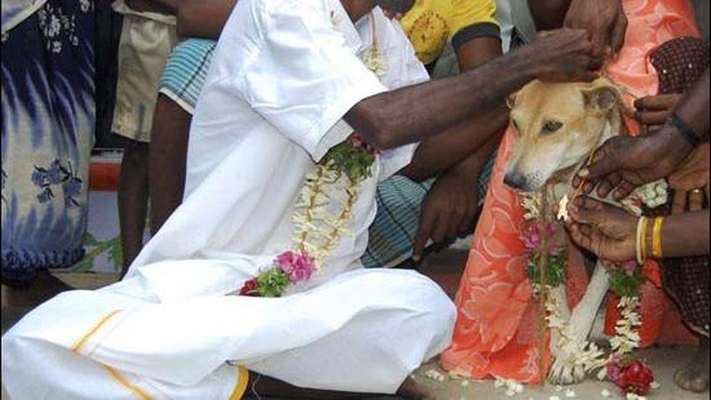Di India, Manusia Bisa Menikah dengan Anjing atau Pohon
