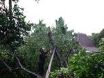 Pohon Tumbang Timpa 1 Rumah di Kemang Timur, Jaksel