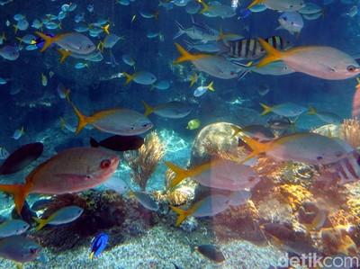 Tempat Berenang Bareng Ratusan Hiu di Singapura
