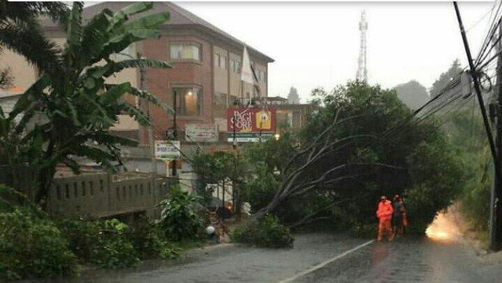 Pohon Tumbang Menutup Jalan di Depan TPU Jeruk Purut