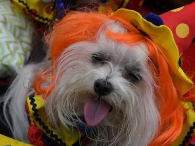 Saat Anjing-anjing Berkostum Halloween
