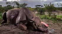 Foto Pembantaian Badak Menangi Penghargaan Bergengsi Dunia