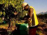 Kerja Paksa di Sektor Perkebunan Australia Dinilai Mirip Perbudakan