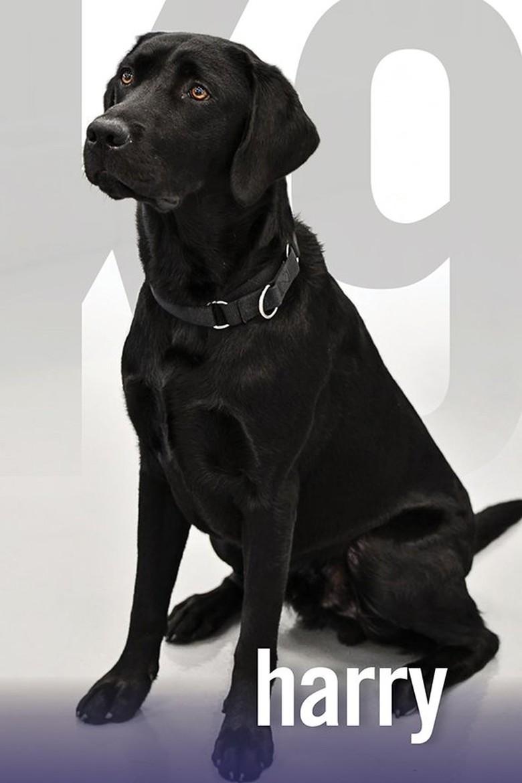 Foto: Guk! Ini Harry, Agen CIA Pengganti Lulu Si Labrador