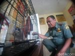 Aparat Tangkap Warga Sukabumi Penjual Owa Jawa via Medsos