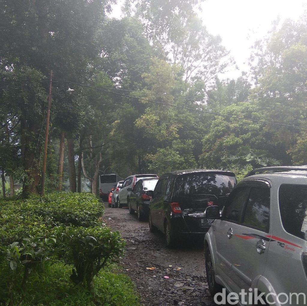 Sudah 3 Jam PNS DKI Peserta Tea Walk Terjebak di Gunung Mas