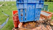 Harga Sayur di Queensland Naik Gila-Gilaan Akibat Banjir