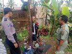 Pria Sukabumi Dirantai di Pohon Pernah Kabur saat Pengobatan
