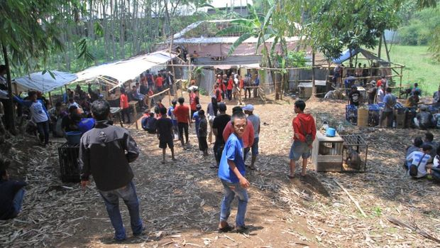Ini Lokasi Adu Bagong di Kabupaten Bandung yang Disorot Dunia