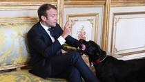 Foto: Nemo, Anjing yang Nyelonong Kencing Saat Presiden Rapat