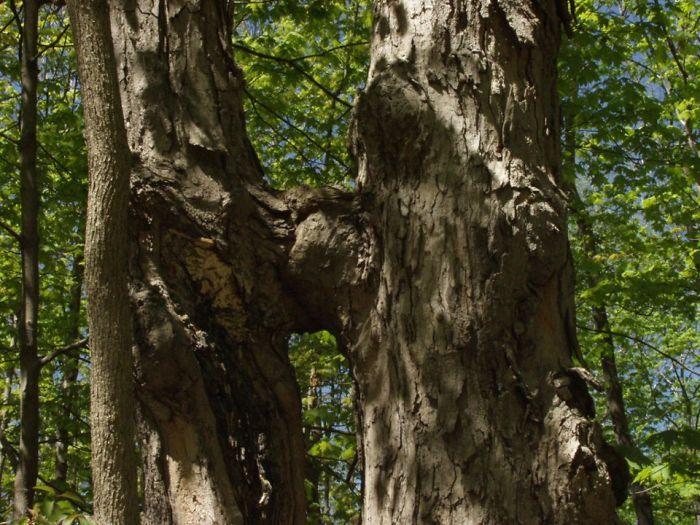Pohonnya lagi ciuman. (Foto: Boredpanda)