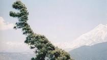 Potret Viral Pohon Berwujud Aneh Tapi Nyata