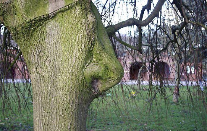 Si pohon ternyata punya hidung layaknya manusia. (Foto: Boredpanda)