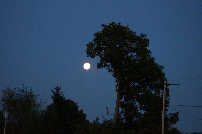 Tampak pohon yang seperti wujud Godzila sedang ini memakan bulan. Keren ya. (Foto: Boredpanda)