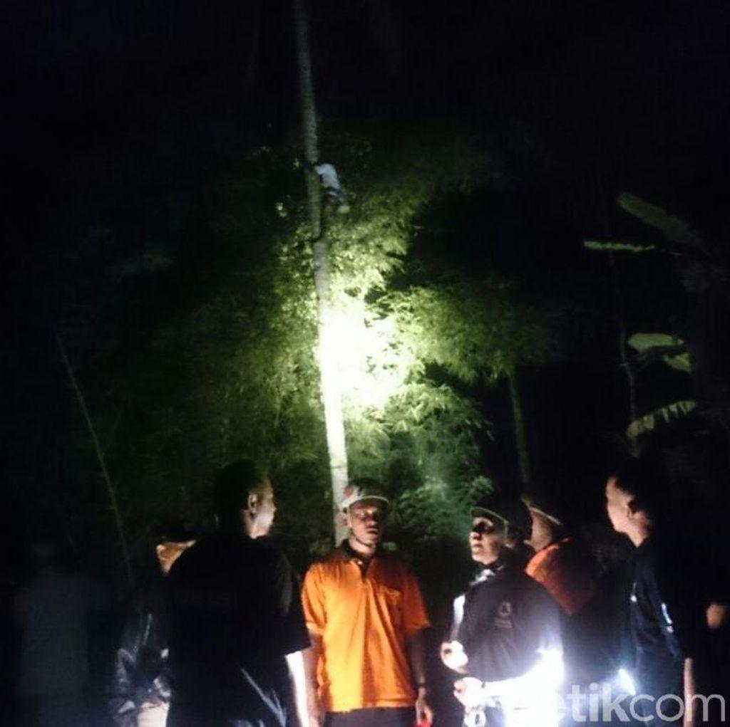 Pria di Magelang Panjat Pohon Kelapa dan Ogah Turun Sejak Pagi Tadi