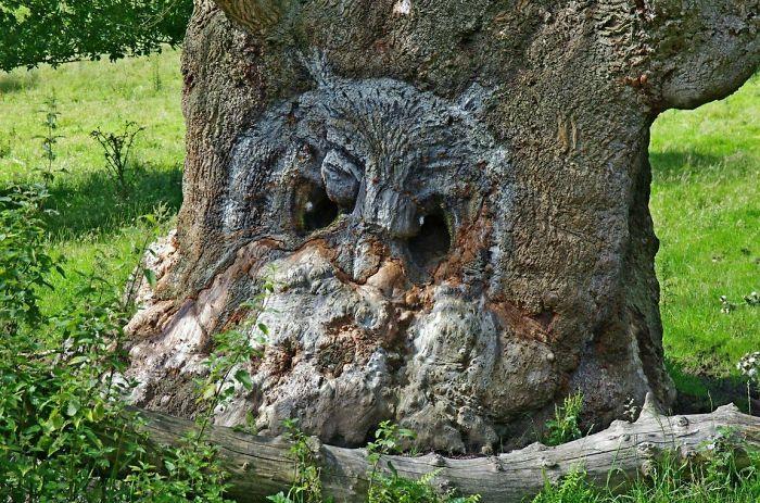 Adanya dua lubang membuat pohon ini terlihat seperti burung hantu. (Foto: Boredpanda)