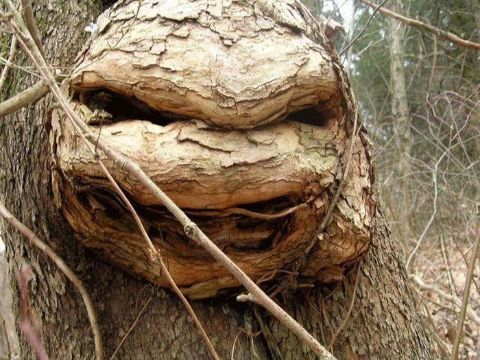 Ninja Turtle nyamar jadi pohon. (Foto: Boredpanda)