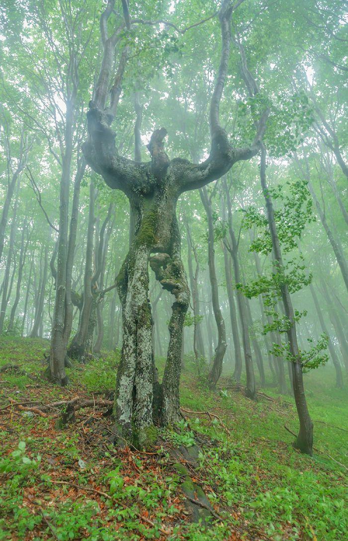 Seperti monster pohon berjalan. (Foto: Boredpanda)