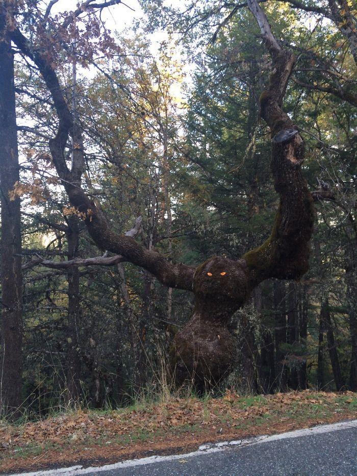 Wujud pohon ini seperti hewan liar raksasa, bahkanpenduduk di sanabahkan memberinya mata berwarna merah agar tampak hidup dan terlihat seram.(Foto: Boredpanda)